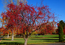 Scarlet Autumn Trees Stock Photo