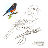 Scarlet bellied mountain tanager draw vector Stock Photography