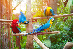 Scarlet and blue macaw perched on a wooden post enjoying the warmth of the evening sun Royalty Free Stock Photos