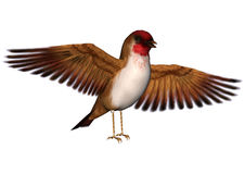 Scarlet Finch Royalty Free Stock Photo