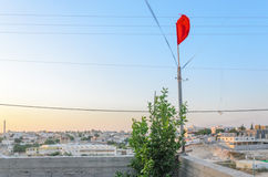 Scarlet flag and green tree in the sunset over the city of Rahat, near Beersheba, the Negev, Israel Royalty Free Stock Images