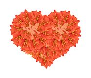Scarlet Flame Bean Flowers in A Heart Shape Royalty Free Stock Image