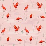 Scarlet Ibises seamless texture Royalty Free Stock Photo