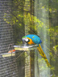 Scarlet macaw in cage royalty free stock photography