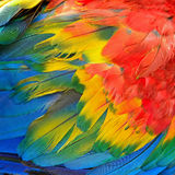 Scarlet Macaw feathers Stock Photography