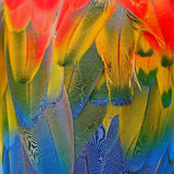 Scarlet Macaw feathers Stock Photos