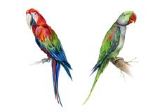 Scarlet macaw parrot and green Alexandrine parrot. stock illustration