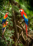 Scarlet macaw parrots. Portrait of colorful scarlet macaw parrots somewhere in Mexico Royalty Free Stock Photo