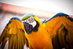 Scarlet Macaw on Perch. Hello Parrot. Stock Photos