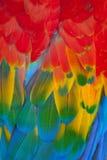 Scarlet macaw. A portrait of beautiful Scarlet macaw Royalty Free Stock Photo