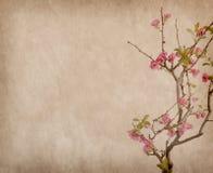 Scarlet Malus spectabilis flower Stock Images