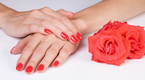Scarlet manicure and roses Stock Images