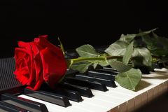 Scarlet rose on keyboard of the electronic piano on black background Stock Photography