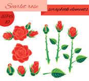 Scarlet rose scrapbook elements Royalty Free Stock Photography