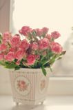 Scarlet roses Royalty Free Stock Photo