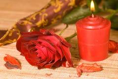 Scarlet sweetheart rose stock photos