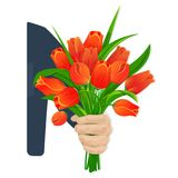Scarlet tulips in hand. A man s hand gives a beautiful bouquet of scarlet tulips. Flowers for birthday, March 8, Valentine s Day, anniversary. For gift cards Royalty Free Stock Image
