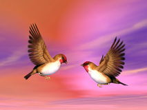 Scarlett finch birds couple - 3D render. Two beautiful scarlett finch birds flying face to face as to talk or seduce each other in colorful background sky Stock Images