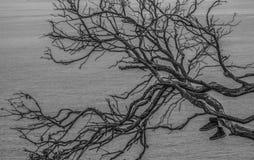 Scarpa abbandonata su un albero Fotografie Stock Libere da Diritti