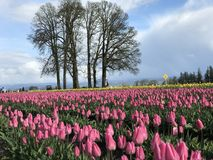 Scarpa di legno Tulip Festival fotografie stock libere da diritti