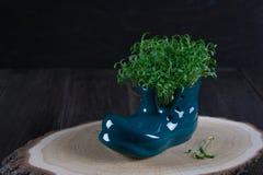 Scarpa miniatura dello stivale con crescione fresco Immagine Stock