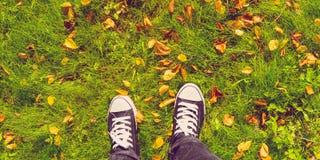 Scarpe da tennis e foglie su erba Immagine Stock