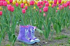 Scarpe da tennis porpora nel giardino del tulipano Fotografia Stock