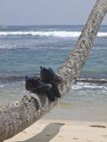 Scarpe sulla palma Fotografia Stock Libera da Diritti