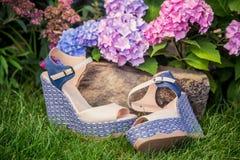 Scarpe italiane, sandali eleganti nel giardino Fotografie Stock Libere da Diritti