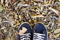 Scarpe nere sulle foglie di autunno Fotografie Stock