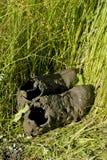 Scarpe sporche di sport coperte di fango in erba verde Fotografie Stock