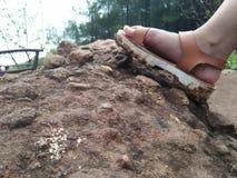 Scarpe sporche riempite di fango immagine stock libera da diritti