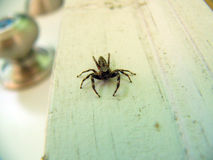 Scarry spider royalty free stock images
