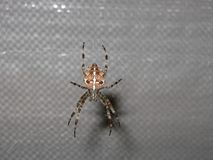 Scarry Spider Weaving the Web stock photography