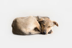 Scarso cane Fotografia Stock Libera da Diritti