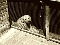 Scarso cane Fotografia Stock