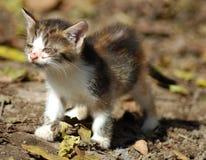 Scarso gattino Immagine Stock