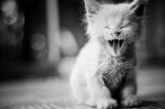 Scarso gattino Fotografia Stock Libera da Diritti