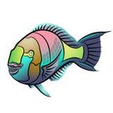 Scarus ferrugineus, Rusty parrotfish, Scarus fish in red sea illustration Stock Photos