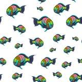 Scarus ferrugineus wzór, Ośniedziały parrotfish, Scarus ryba w czerwonego morza ilustraci Obraz Stock