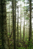 scary δάση Στοκ Εικόνες