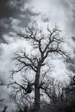 scary δέντρο Στοκ φωτογραφία με δικαίωμα ελεύθερης χρήσης