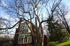 Scary δέντρο Στοκ Εικόνες