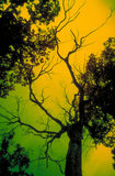scary δέντρο Στοκ Εικόνα