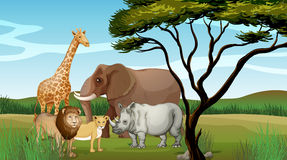 Scary animals in the jungle. Illustration of scary animals in the jungle Royalty Free Stock Photo