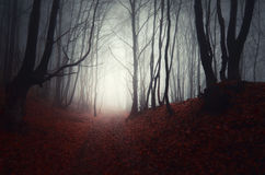 Scary autumn forest on Halloween. Scary haunted autumn forest on Halloween royalty free stock image