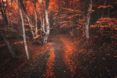 Scary autumn forest with trail in fog. Fall colors. Foggy trees royalty free stock photos