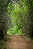 Scary bamboo forest Royalty Free Stock Photos