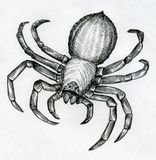 Scary big spider. Scary, big and poisonous spider drawn with ink Royalty Free Stock Photos