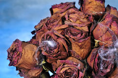 Scary bouquet Royalty Free Stock Photography
